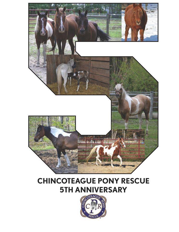 Virginia, Chincoteague Pony Rescue